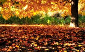 Image result for fall season jpeg