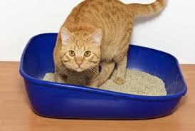 Лучшие наполнители для <b>кошачьего туалета</b> - интернет ...
