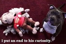 Τελικά οι σκύλοι νιώθουν ντροπή;