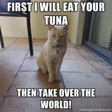 World Domination Cat/Evil Kitty | Know Your Meme via Relatably.com