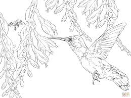 Small Picture Bee Hummingbird coloring page Free Printable Coloring Pages