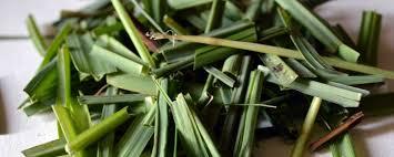 Resultado de imagem para lemongrass heart