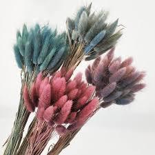 <b>30Pcs</b>/<b>lot</b> Gradient Lagurus Ovatus <b>Natural</b> Dried Flowers Bouquet ...