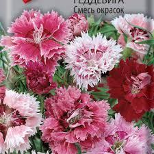 <b>Гвоздика</b> - <b>Семена</b> цветов в цветных пакетах - <b>Семена</b> - Каталог ...