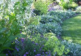 talking to plants my dream garden my dream garden