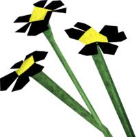 <b>Black flowers</b> | RuneScape Wiki | Fandom