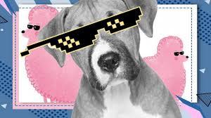 <b>Собака</b> гуляет в солнцезащитных очках. Всё из-за редкой болезни