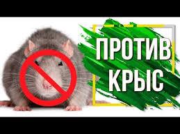 Лучшее <b>средство от Крыс и</b> Мышей ✔️ Грызуны в доме ✔️ Как ...