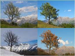 """Résultat de recherche d'images pour """"saisons"""""""