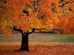 لكل محبي صور الطبيعة  اكبر تجميع لصور الطبيعة - صفحة 3 Images?q=tbn:ANd9GcR-G-hHjuXno_LkmeIiCkHOGADvza637i7RfnzYZJYVAPWWxO7nuw