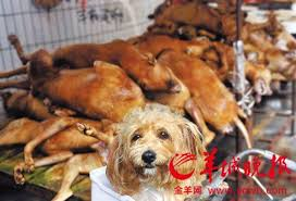 Image result for yulin dog festival