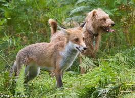 Γνωρίζετε πόσους μύθους έχει γράψει ο Αίσωπος για την αλεπού;