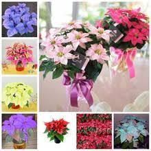 Online Get Cheap <b>Flower Poinsettia</b> -Aliexpress.com   Alibaba Group