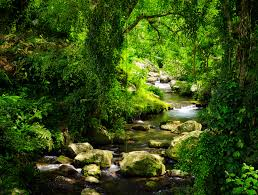 <b>Тропические</b> леса способствуют глобальному потеплению ...