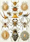 Images & Illustrations of arachnid