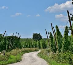 <b>W 912</b> Considerations for Producing and Marketing Hops in ...