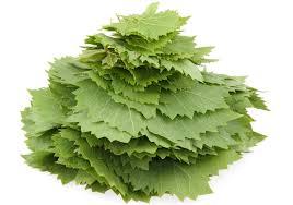 بالأعشاب الطبيعية images?q=tbn:ANd9GcR