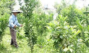 Kết quả hình ảnh cho vườn cây