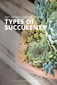 Types of <b>Succulents</b> (with pictures) | <b>Succulents</b> and Sunshine