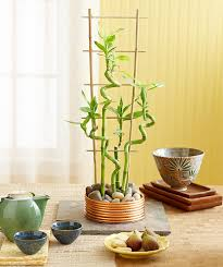 bamboo plants interior design exciting interior home office and bamboo plants interior design charming office plants