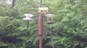 proof bird feeder