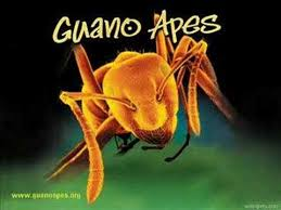 <b>Guano Apes</b> - Suzie (Official Music Video) (2017 Version) - YouTube