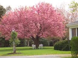 Image result for fast growing trees