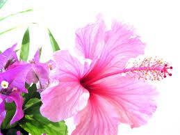 Resultat d'imatges de ramito de flores silvestres