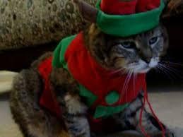 <b>Cat</b> hates <b>Christmas outfit</b> ! - YouTube