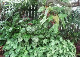 contrast foliage plants brisbane office plants