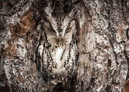 Image result for owls at night