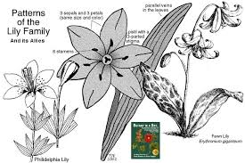 Liliaceae: Lily Family. Identify plants and flowers.