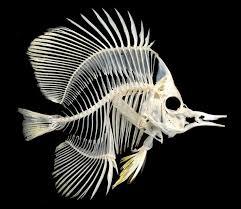 Pin de razgon en fishbone (con imágenes) | Cráneos de animales ...
