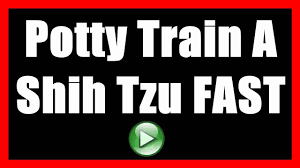 start potty training potty training infants how to potty train a shih tzu to not poop indoors house train a dog