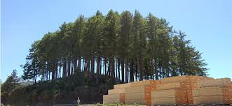 Image result for pine trees timber