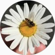NashiPear . (shan1494) on Pinterest
