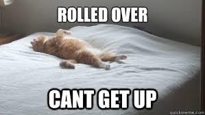 Fat Cat memes | quickmeme via Relatably.com