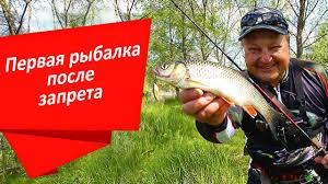 Окунь и голавль на первой рыбалке после запрета|Тест <b>Crazy</b> ...
