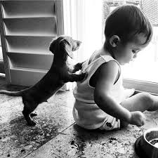 a dog and his <b>boy</b> | Щенки <b>таксы</b>, Животные, Товары для животных