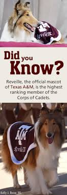 Texas A M University San Antonio Texas A M University Galveston Campus In the fall of             Latino students were enrolled at TAMU   constituting about one tenth of its nearly        students  Latinos  accounted for