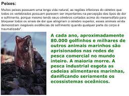 Resultado de imagem para IMAGENS DA UTILIDADE DOS ANIMAIS AQUÁTICOS CRIADOS POR DEUS.