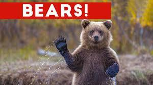 Funniest <b>Cute Bear</b> Video Compilation 2016 | Funny Pet Videos ...