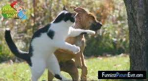 Cat Image Battle Images?q=tbn:ANd9GcR29xbIdNOMtnD9a8ARi7Y4yZgu16__K8zSVYJXQpJqEoPXOkiI