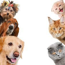Vivid Animals <b>Cats</b> Dog Light Switch 3d Wall <b>Stickers Toilet Sticker</b> ...