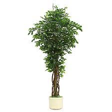 <b>Искусственные</b> растения из официального каталога Твой Дом ...