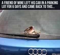 Brave-bird.jpg via Relatably.com