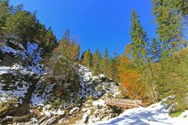 View Of The Wooden <b>Bridge</b> And <b>Forest</b> Covered With <b>Snow</b> During ...