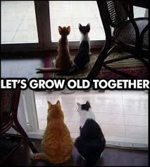 Let's grow old together | Funny Pictures, Quotes, Memes, Jokes via Relatably.com