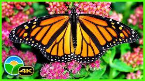 The Best Relaxing Garden in 4K - Butterflies, <b>Birds</b> and <b>Flowers</b>     2 ...