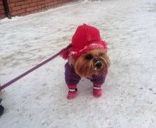 Dogland - Одежда для <b>Собак</b>